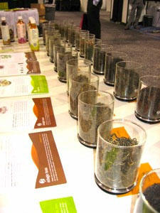 Part of the Adagio Teas display