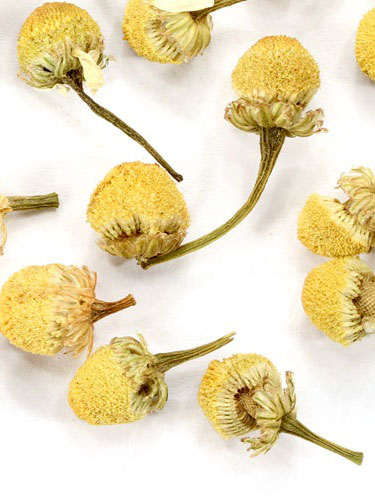 Chamomile-The Calming Flower