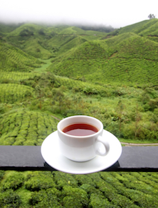 Get inspired with the flavor of a high-mountain tea.